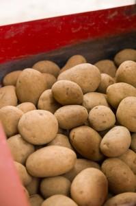 Bartholamewpotatoes